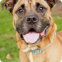 Adopt A Pet :: Leonardo - Marina del Rey, CA