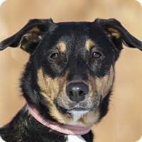 Adopt A Pet :: Sierra - Ile-Perrot, QC