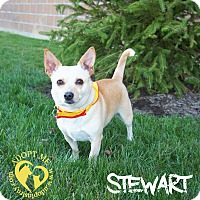 Chihuahua/Corgi Mix Dog for adoption in Newport, Kentucky - Stewart