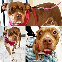 Adopt A Pet :: MIA - Orland Park, IL