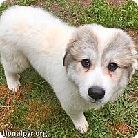 Adopt A Pet :: No-No in AL - new pup! - Beacon, NY