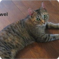 Adopt A Pet :: Jewel - Portland, OR