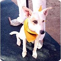 Adopt A Pet :: Kenya - Scottsdale, AZ