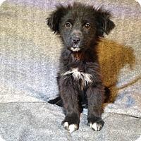 Adopt A Pet :: Scotch - Toledo, OH