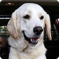Adopt A Pet :: Lissa - Coppell, TX