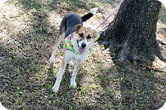 Collie Mix Dog for adoption in Muldrow, Oklahoma - Addison