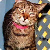 Adopt A Pet :: Bunny - Arkadelphia, AR