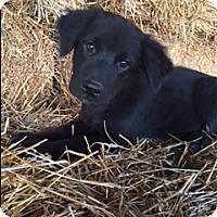 Adopt A Pet :: Slater - Hamburg, PA