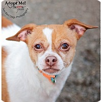 Adopt A Pet :: Peaches and Pumpkin - Seattle c/o Kingston 98346/ Washington State, WA
