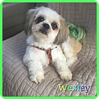Adopt A Pet :: Wesley - Hollywood, FL