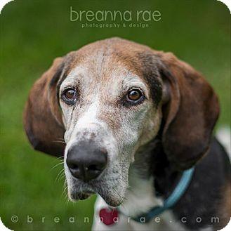 Treeing Walker Coonhound Mix Dog for adoption in Sheboygan, Wisconsin - Mattie