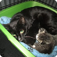 Adopt A Pet :: Beatrice - Herndon, VA