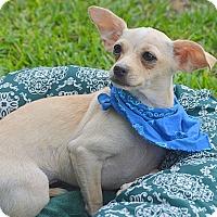 Adopt A Pet :: Jose - San Leon, TX