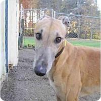 Adopt A Pet :: Vane (Vane On the Run) - Chagrin Falls, OH