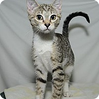 Adopt A Pet :: Bebe - New York, NY