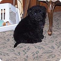 Adopt A Pet :: Truman - Denver, IN