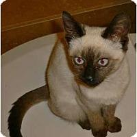 Adopt A Pet :: Machi - lake elsinore, CA