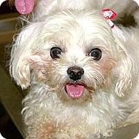 Adopt A Pet :: A-Hua - Temple City, CA