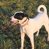 Adopt A Pet :: Indy - st. jacob, IL