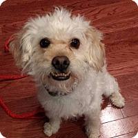 Adopt A Pet :: McCoy - Plainfield, IL