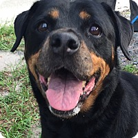 Adopt A Pet :: Momma - Seffner, FL