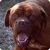 Adopt A Pet :: Andre - Prole, IA