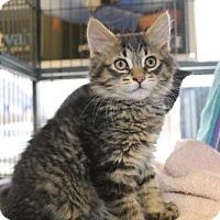 Adopt A Pet :: Frederick - Hamilton, ON
