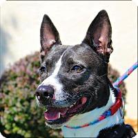 Adopt A Pet :: Rocky - Clarksville, TN