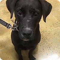 Adopt A Pet :: Bitsy - Dawson, GA