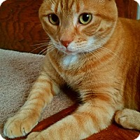 Adopt A Pet :: Cheeto With *****VIDEO***** - Akron, OH