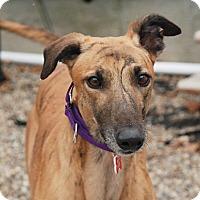 Adopt A Pet :: Cadre - Ware, MA