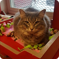 Adopt A Pet :: Athena - yuba city, CA