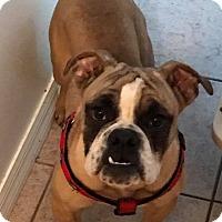 Adopt A Pet :: Reva - Odessa, FL