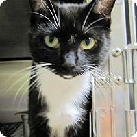 Adopt A Pet :: Franklin - Lunenburg, MA