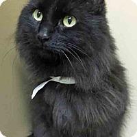 Adopt A Pet :: Simba - Channahon, IL