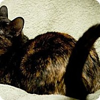 Adopt A Pet :: Britney - Palatine, IL