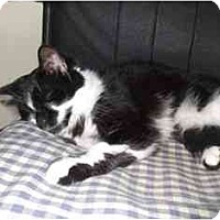 Adopt A Pet :: Trinity - Wakinsville, GA