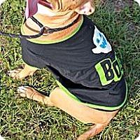 Adopt A Pet :: Bonnie - Orlando, FL
