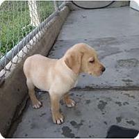 Adopt A Pet :: Lucky Charms - Cumming, GA