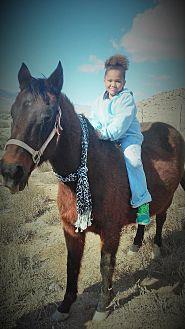 Quarterhorse for adoption in Salina, Utah - Mamma Justice