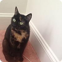Adopt A Pet :: Roxy - Pittstown, NJ