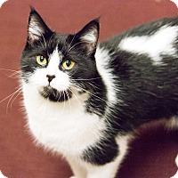 Adopt A Pet :: Ali - Chicago, IL