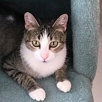 Adopt A Pet :: Sweet Pea - Mission Viejo, CA