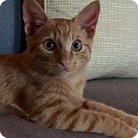 Adopt A Pet :: Kovu & Petey- Adoption Pending - Arlington, VA