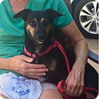 Adopt A Pet :: Pennie - Chandler, AZ