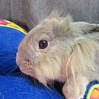 Adopt A Pet :: Fozzie - Newport, DE