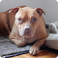 Adopt A Pet :: Mocha - Long Beach, NY