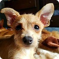 Adopt A Pet :: OLIVER - Emeryville, CA