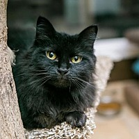 Adopt A Pet :: Raffi - Algonquin, IL