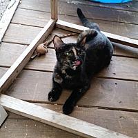 Adopt A Pet :: Betty - Bronson, FL